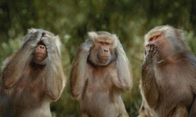 «Γέμισε η Μεσσηνία Αφρικανικές Μαϊμούδες, στις Σπηλιές με τα Κουκούτσια!!!» 11