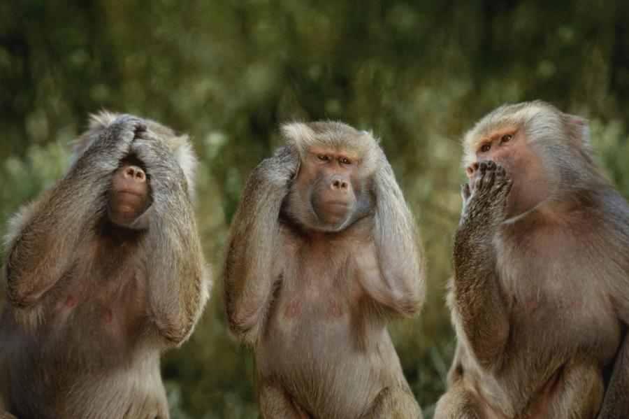 «Γέμισε η Μεσσηνία Αφρικανικές Μαϊμούδες, στις Σπηλιές με τα Κουκούτσια!!!»