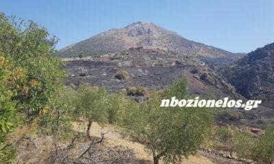 Πυρκαγιά στις Μυκήνες. Αυτοψία και ρεπορτάζ 22