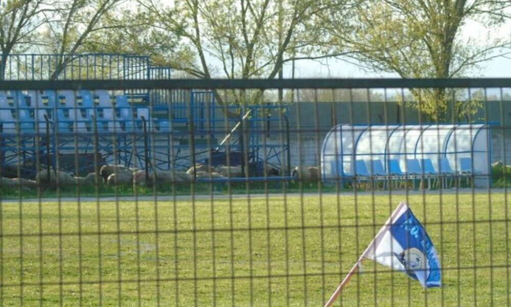 Πρόβατα (!) σε αγώνα Γ' Εθνικής στην Καρδίτσα... 4