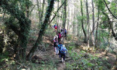Πεζοπορία στο δάσος Σκιρίτιδας την Κυριακή 27 Ιουνίου 2021 6