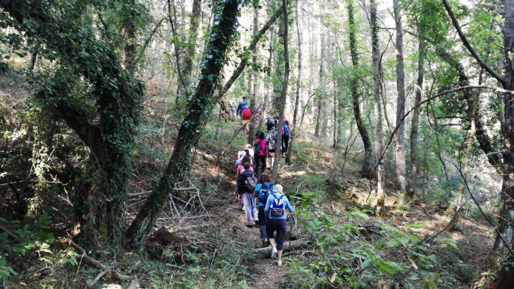Πεζοπορία στο δάσος Σκιρίτιδας την Κυριακή 27 Ιουνίου 2021