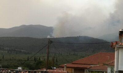 Μαίνεται η φωτιά στην Άνω Μεσσηνία – Κάηκαν σπίτια (+videos) 21
