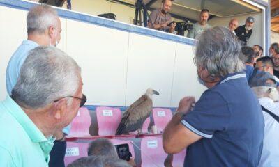 Συμβαίνει τώρα: Αετός...προσγειώθηκε στα επίσημα στην Ιεράπετρα! 14